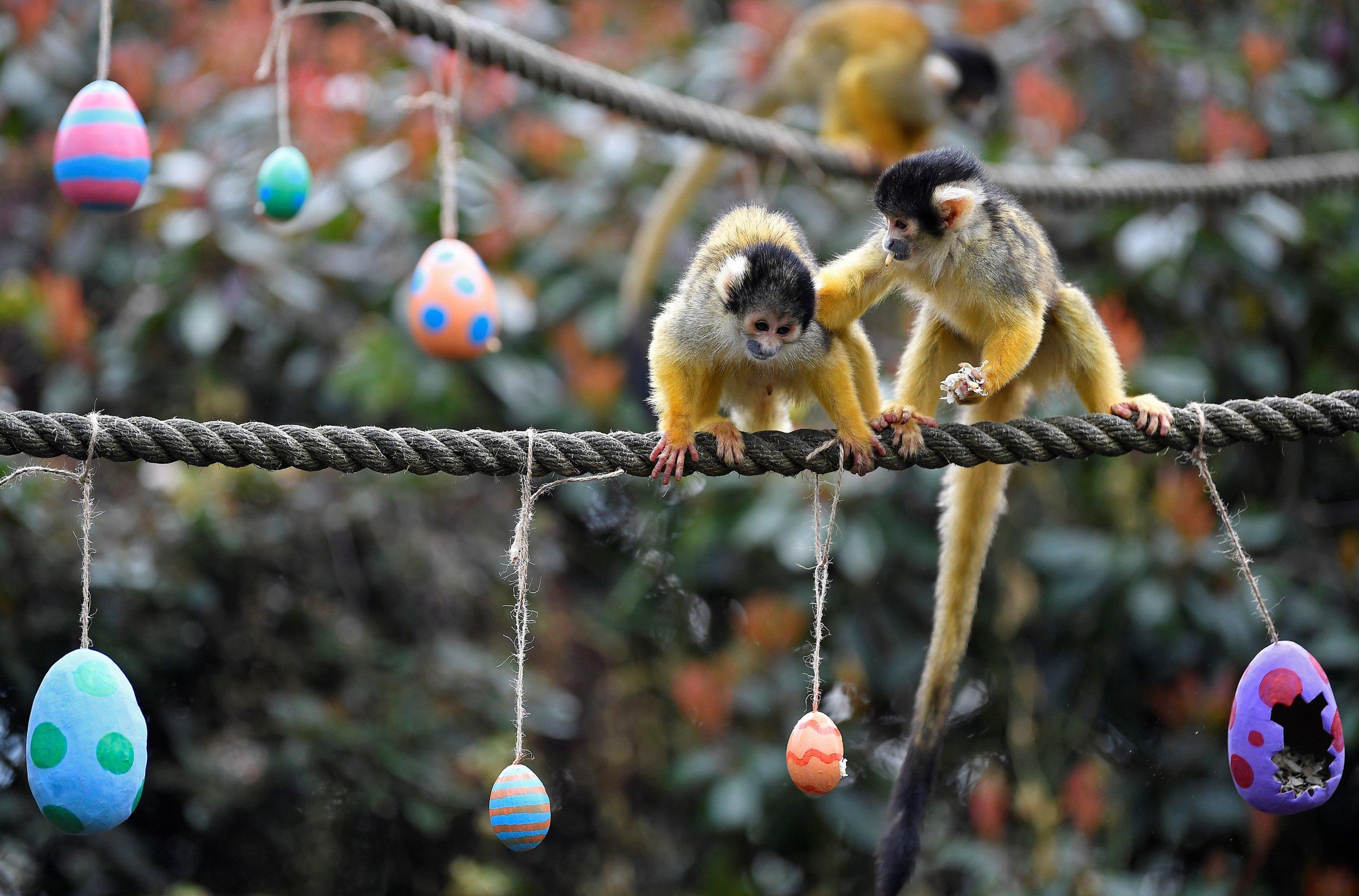 3_29_Monkeys Eggs