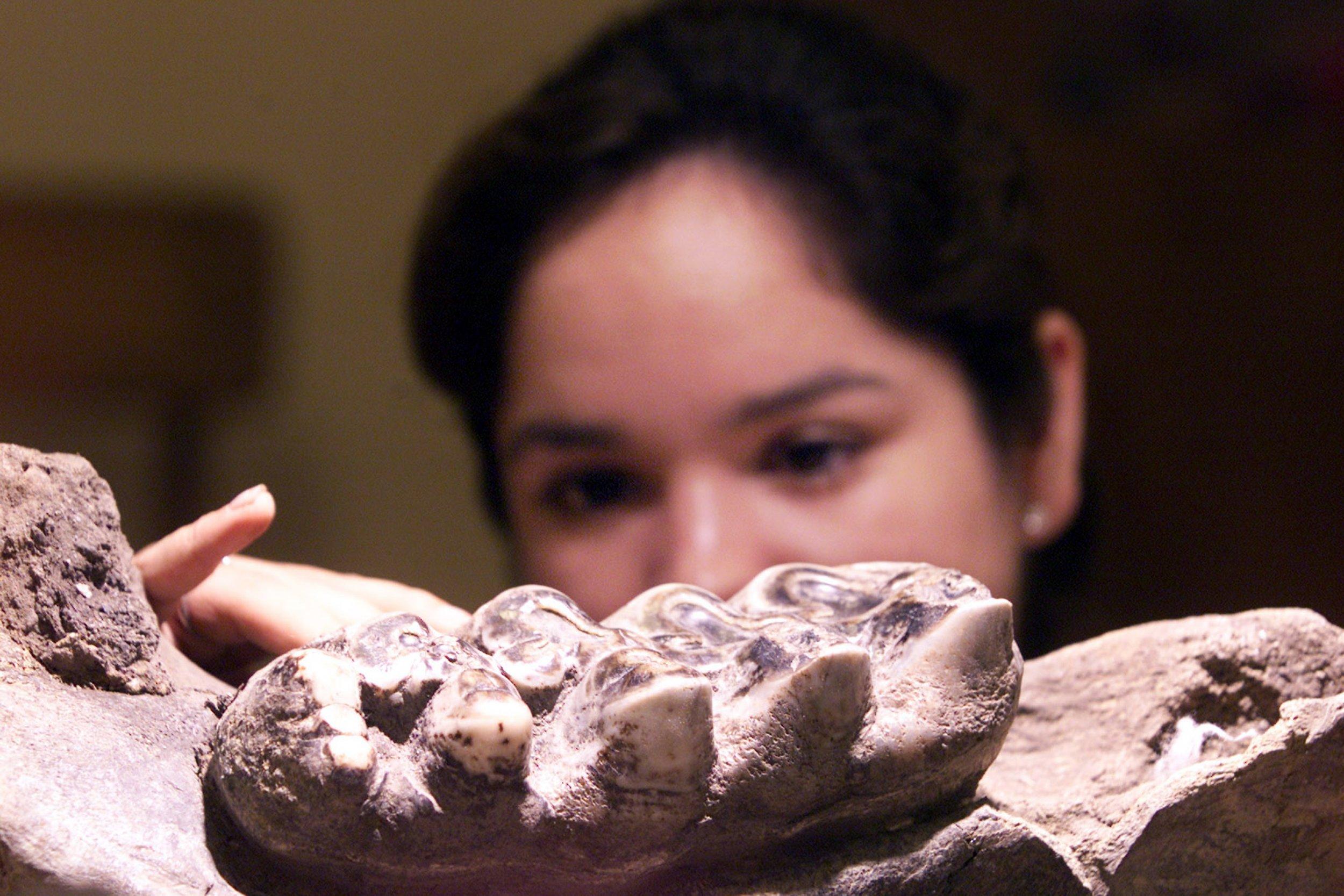 3_29_mastodon Jawbone