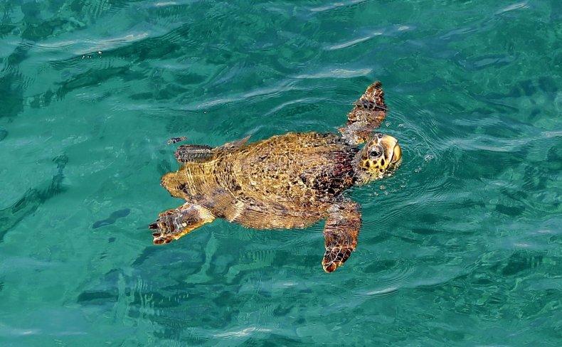 3_29_2017_Sea Turtle