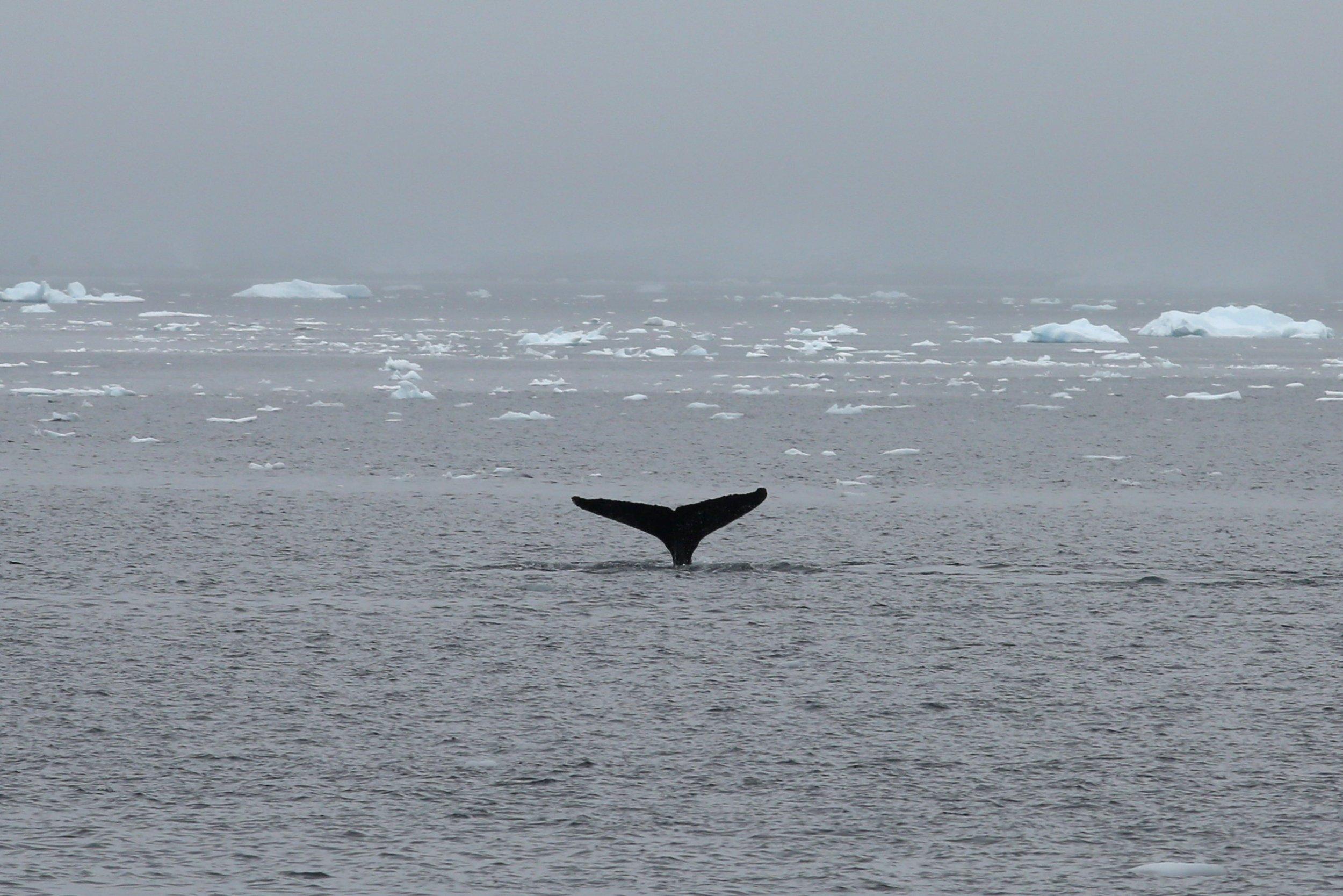 3_31_whale