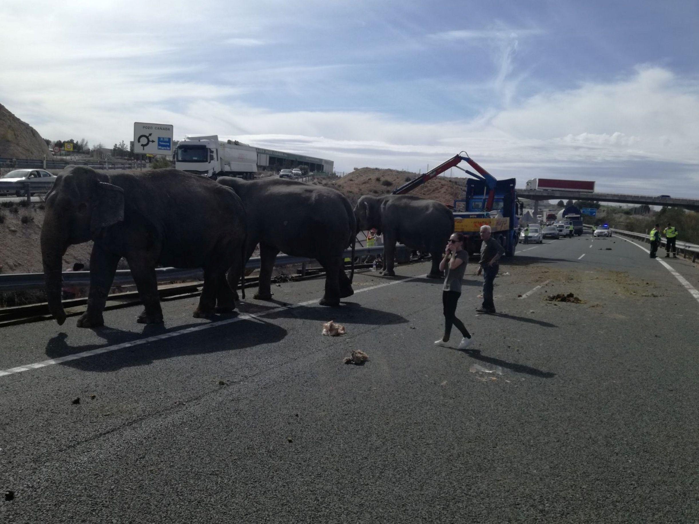 Elephants highway Spain