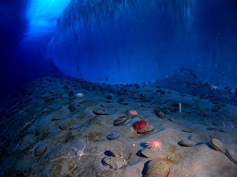 Underwater_mcmurdo_sound