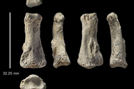 4_9_Ancient fossil finger
