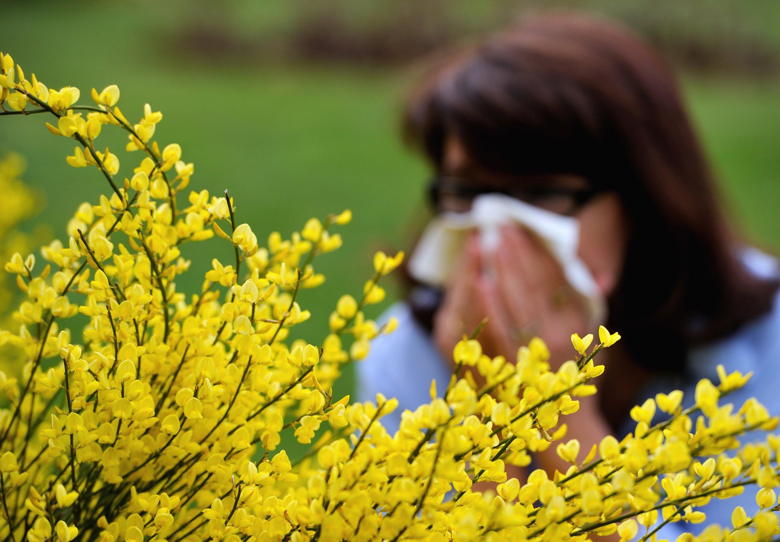 allergy season flowers and sneezing