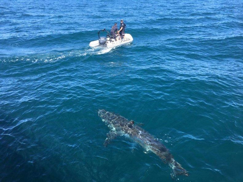04_16_Shark_Australia