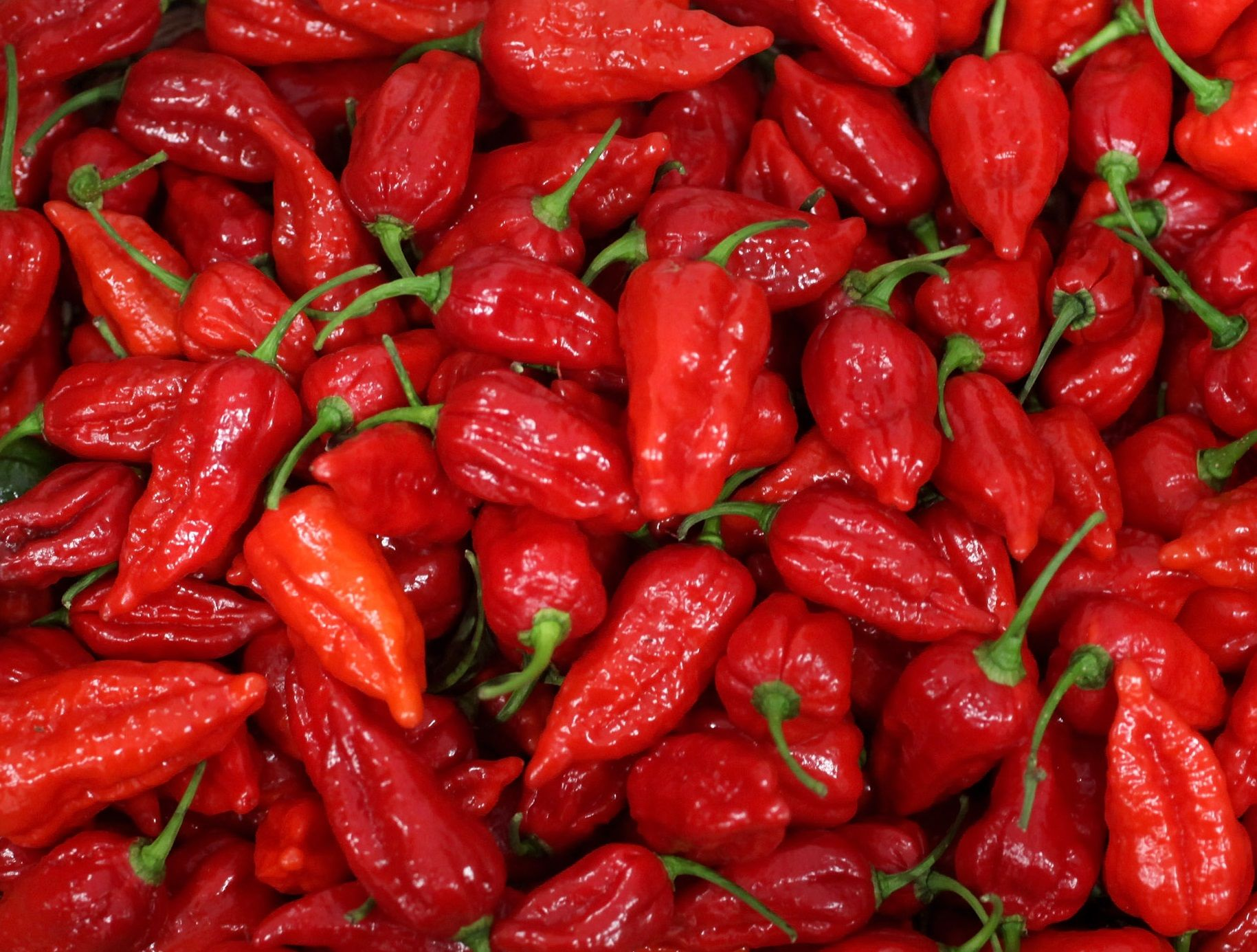Carolina Reaper: How to Safely Eat the World's Hottest ...