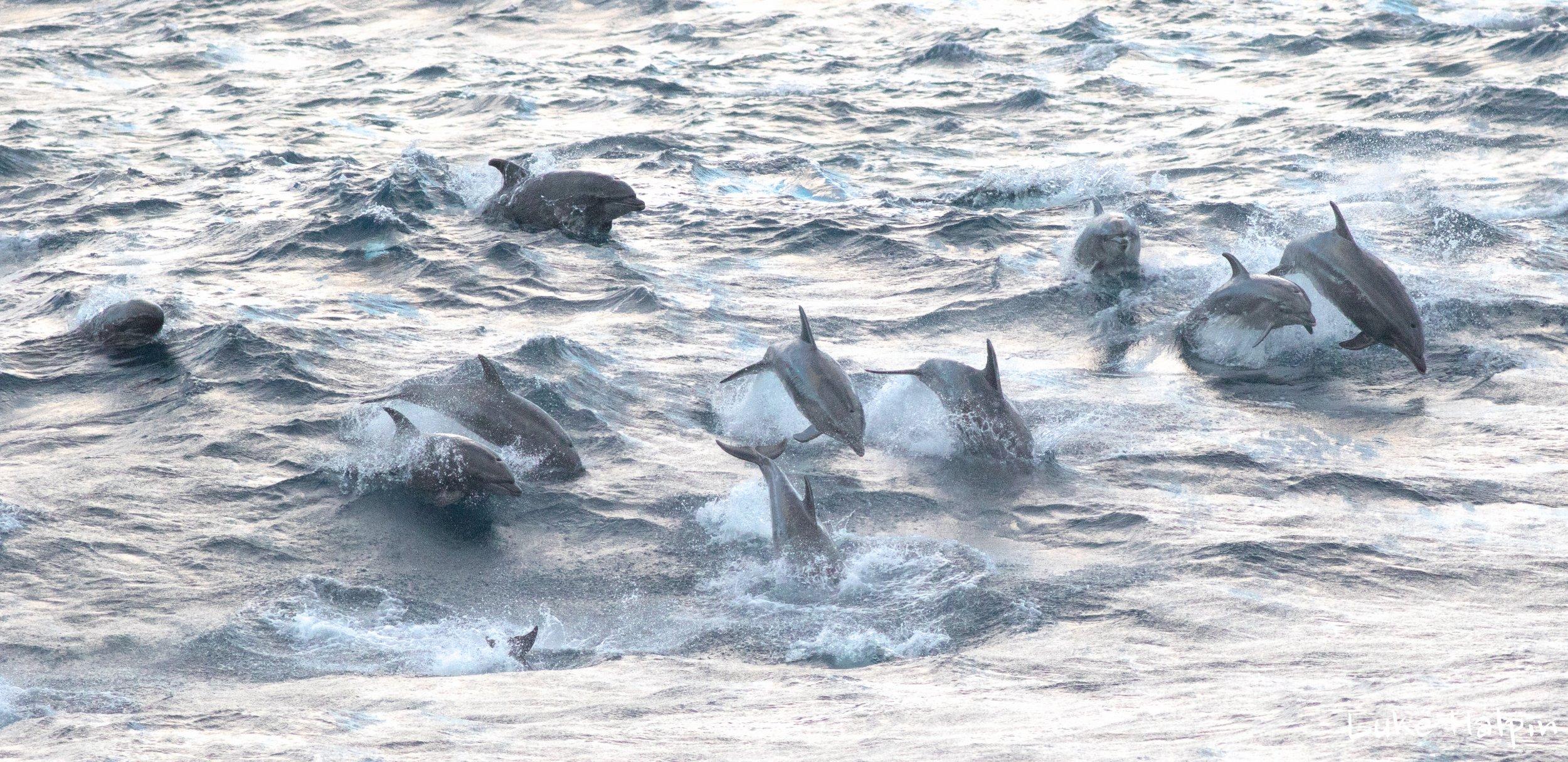 luke halpin bottlenose dolphins