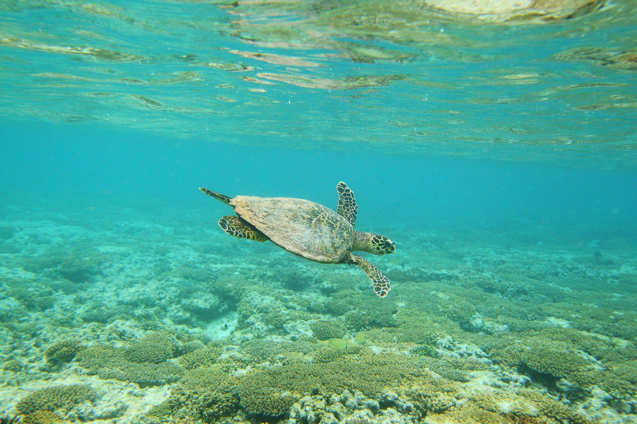 4_19_Great Barrier Reef