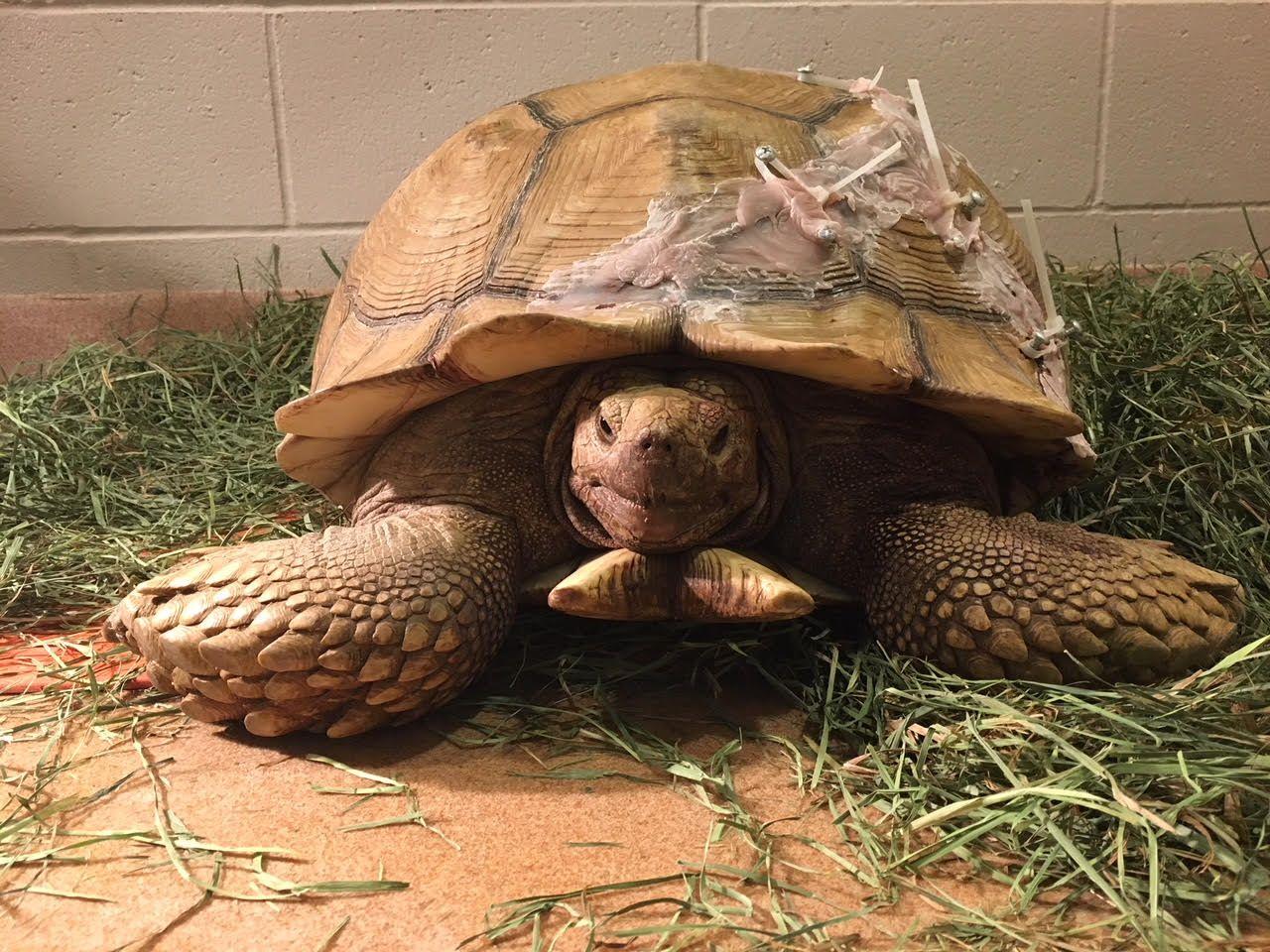 4_19_humpty the tortoise