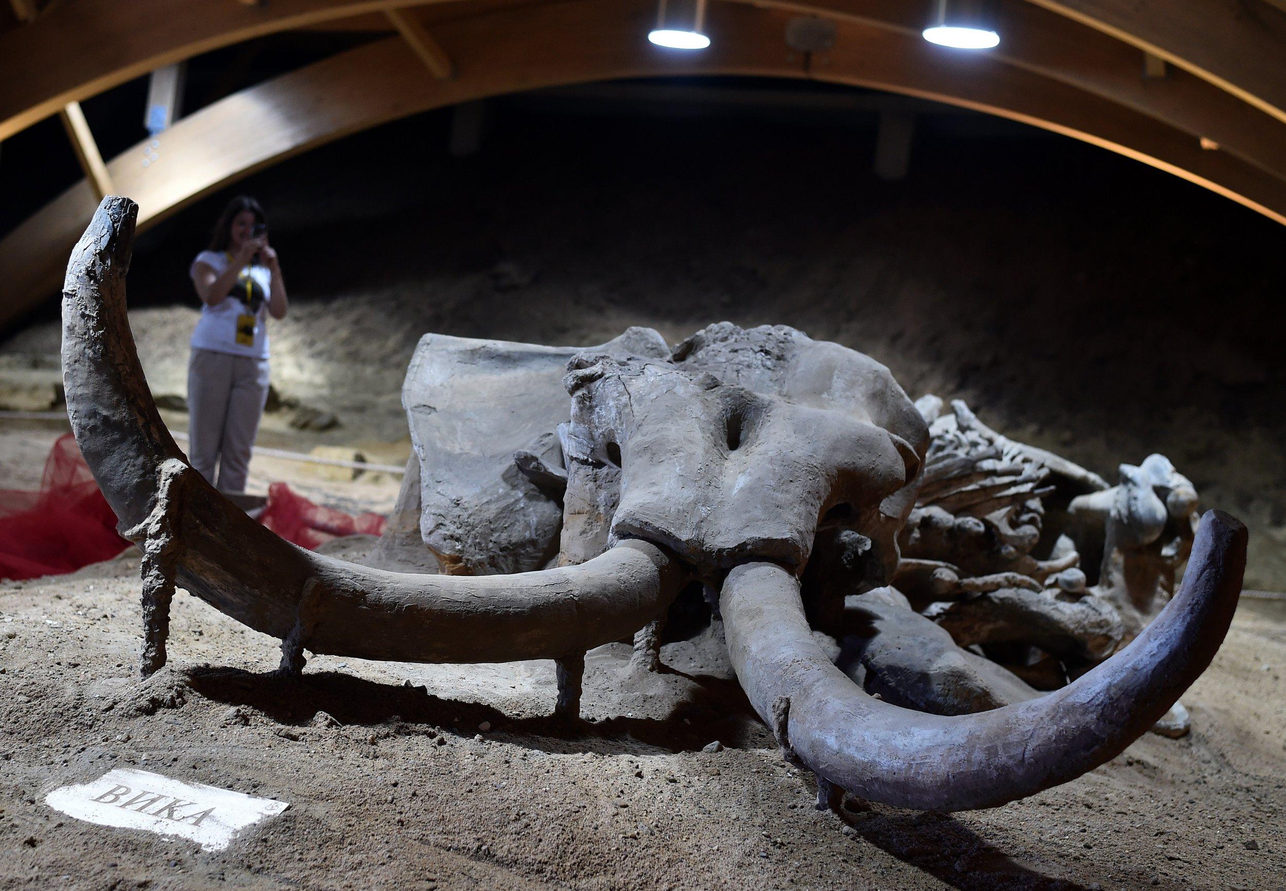 04_19_mammoth_mammal_extinction