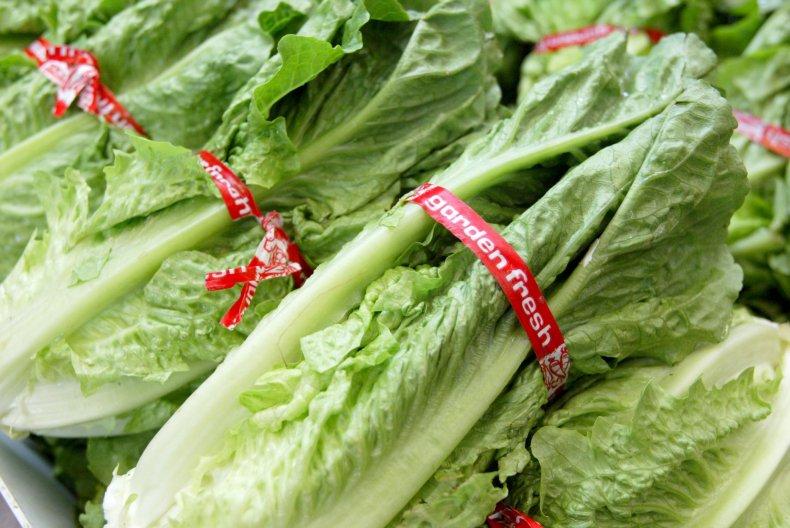 04_20_lettuce
