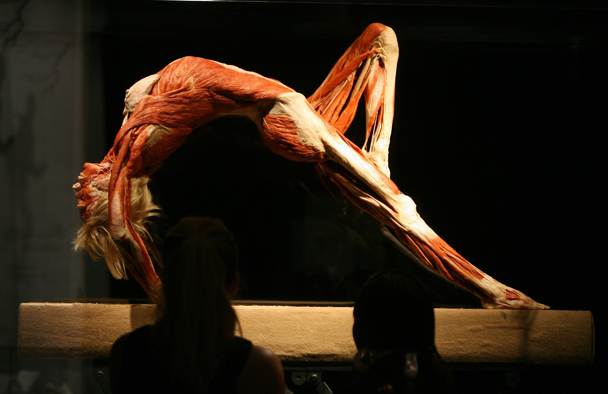 go to exhibition Heidelberg The new BODY WORLDS Museum is devoted to the Anatomy of Happiness and shows the astounding effects of happiness on our wellbeing and health.
