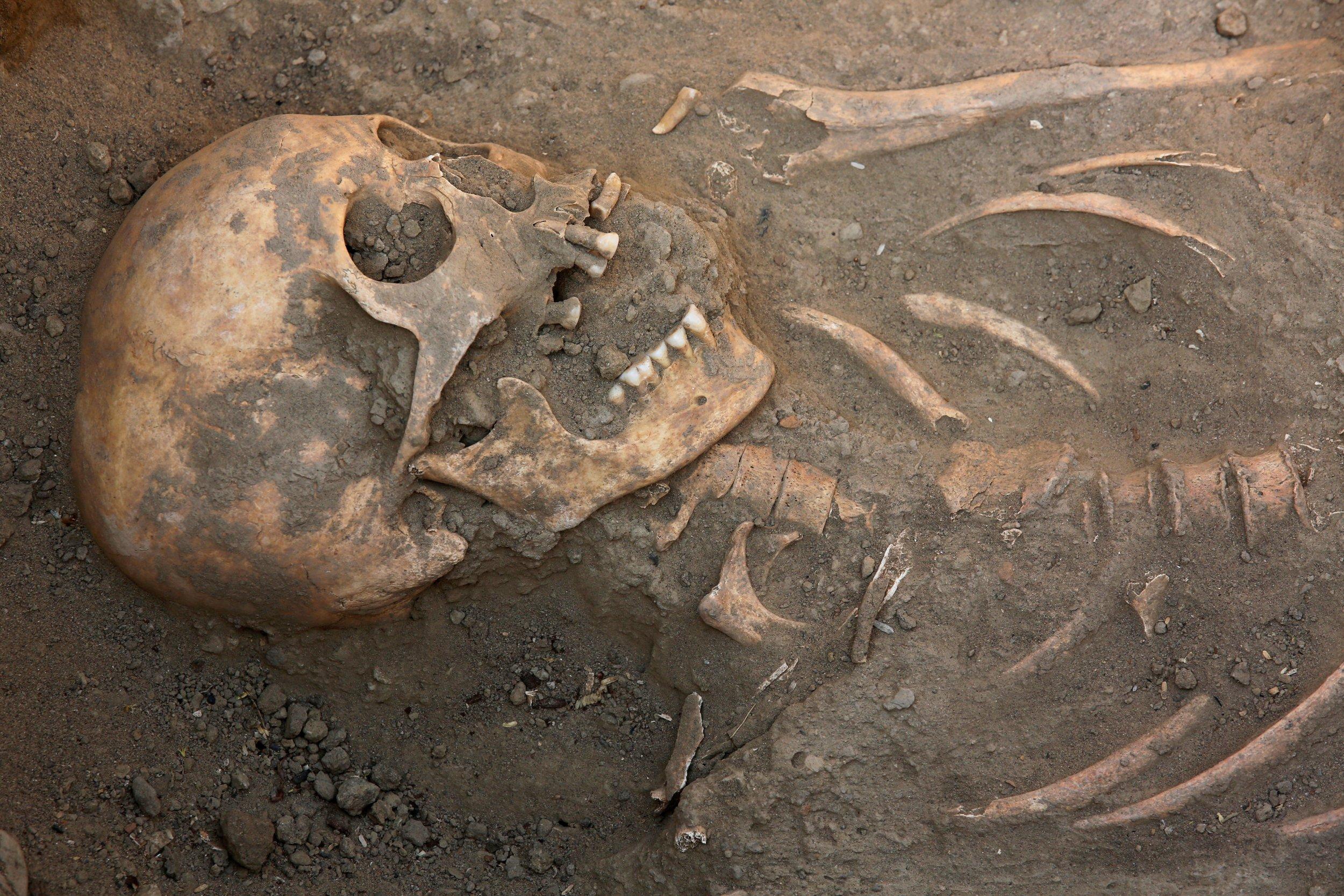 4_25_Human Skeleton