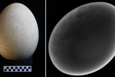elephant-bird-eggs