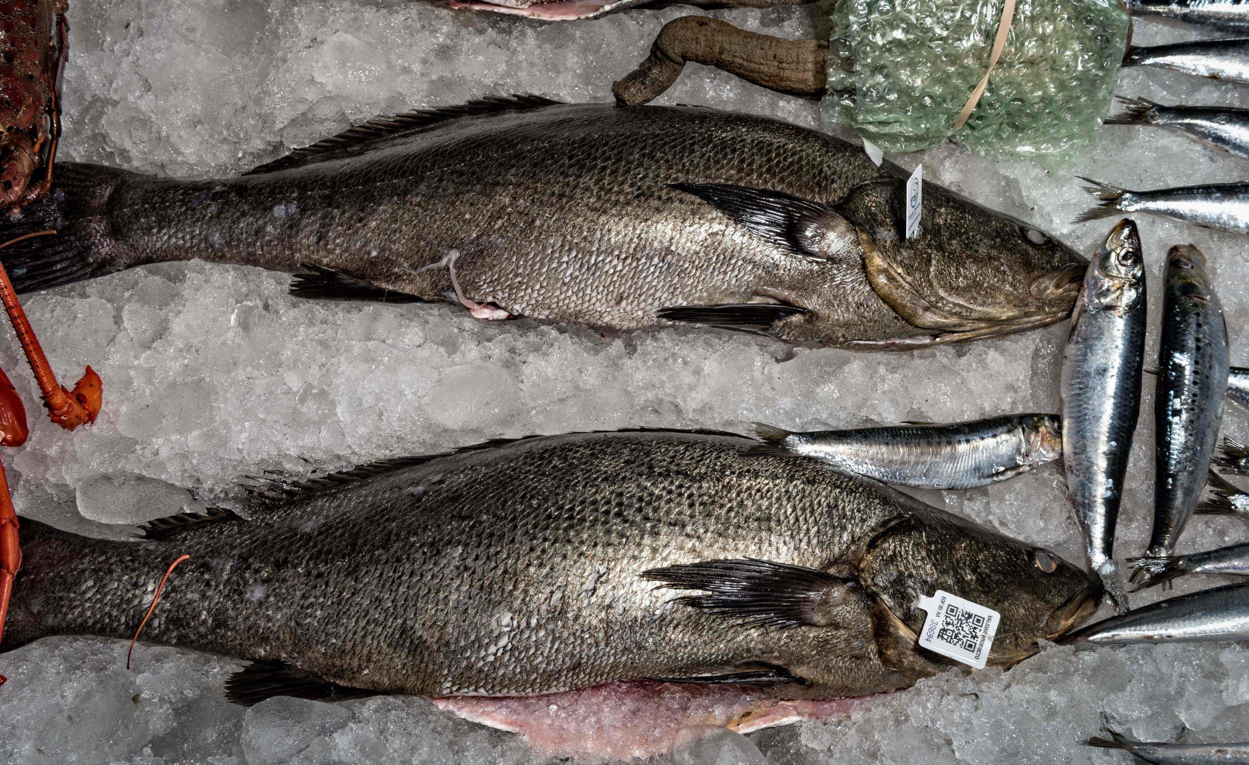 totoaba-fish