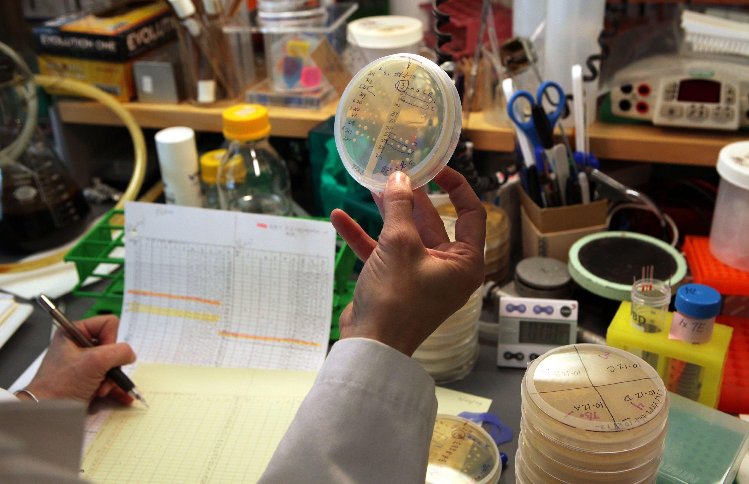 telomerase UCSF