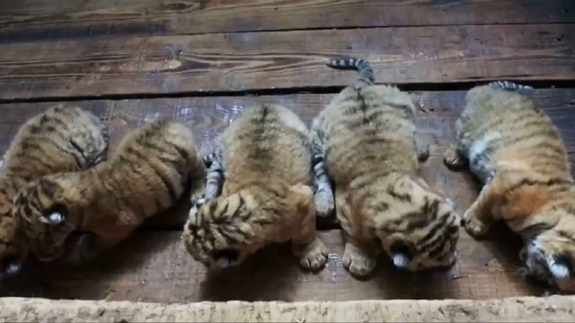 cute_cubs