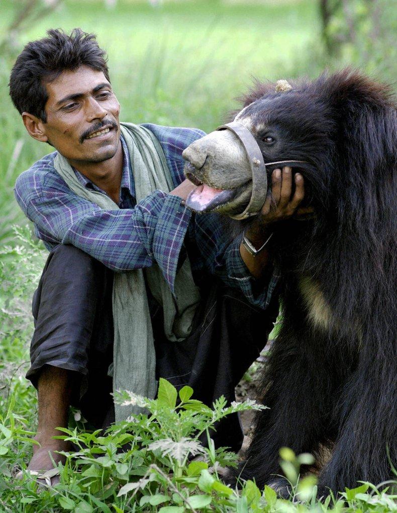 India sloth bear