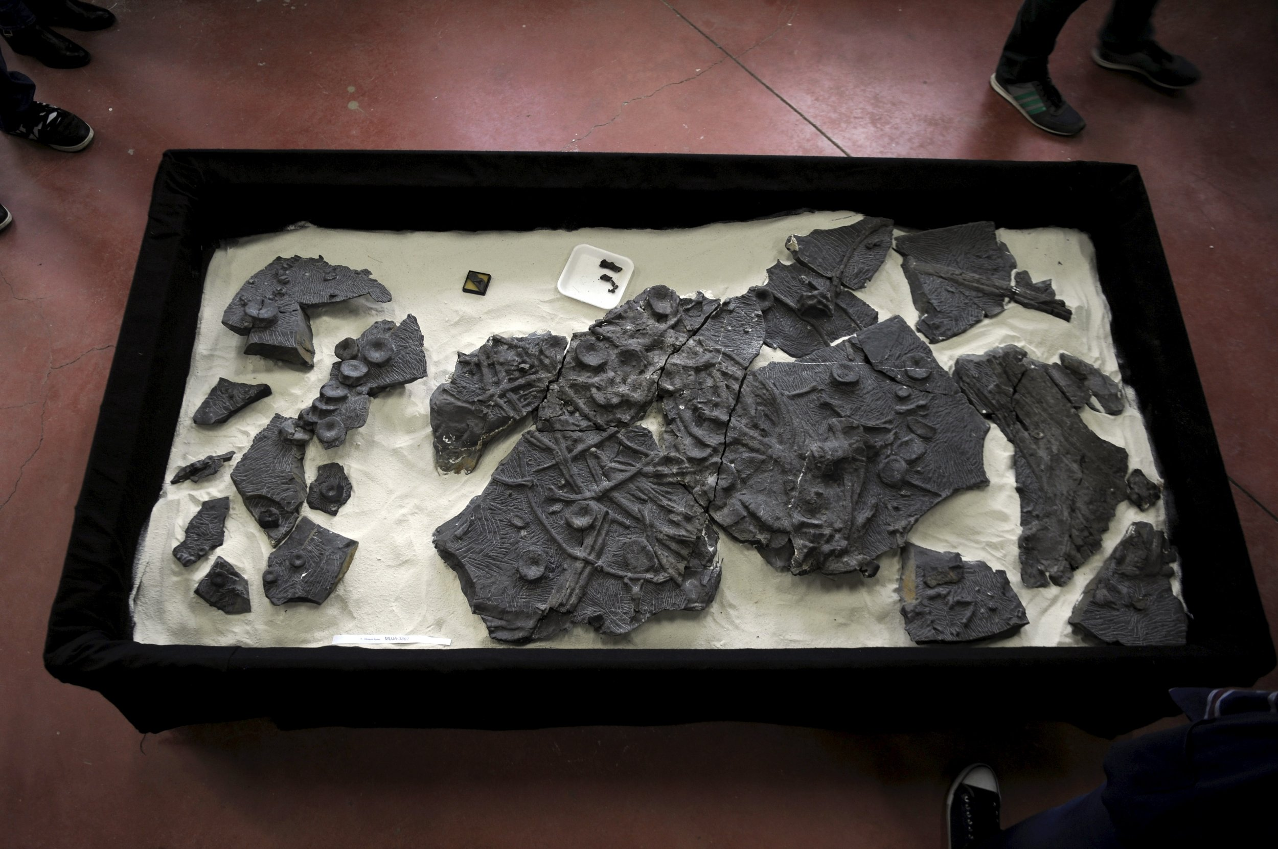 5_4_Fossils Museum display