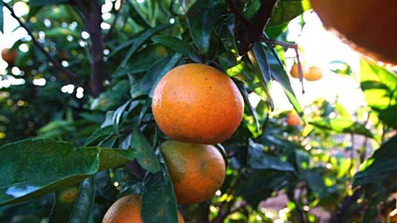 orange, 4-pics-1-word-daily-challenge-may-todays-spain-puzzle-answer-solution-hint-cheat