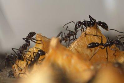 5_9_Ants
