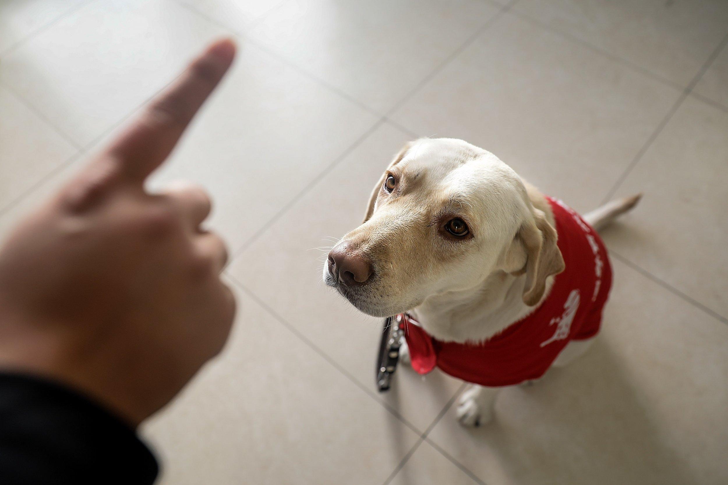 Service Dog Training Virginia Tech