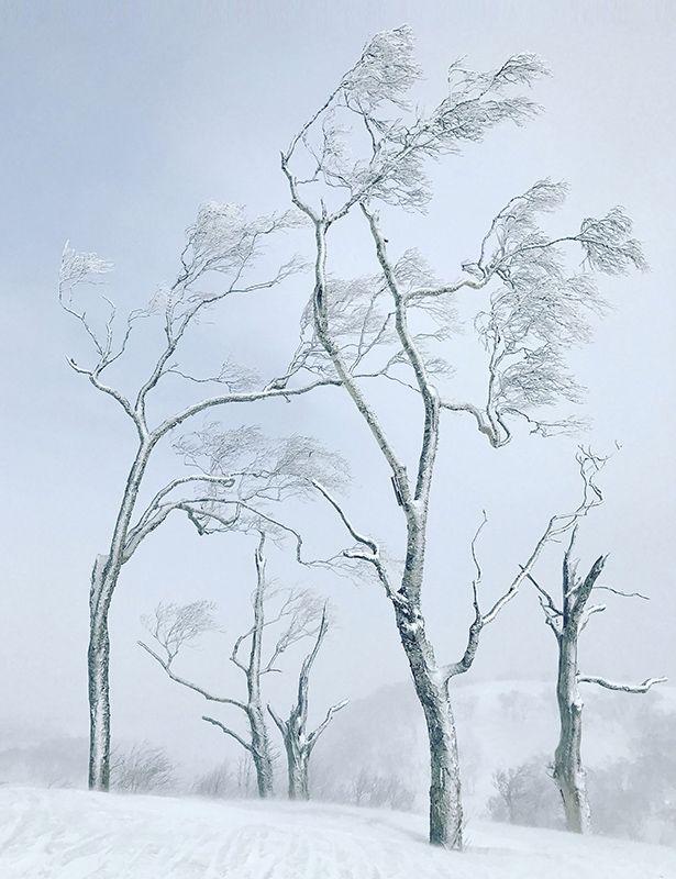 08 Tree-Stephen King 5902