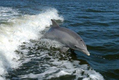 05_15_Dolphin