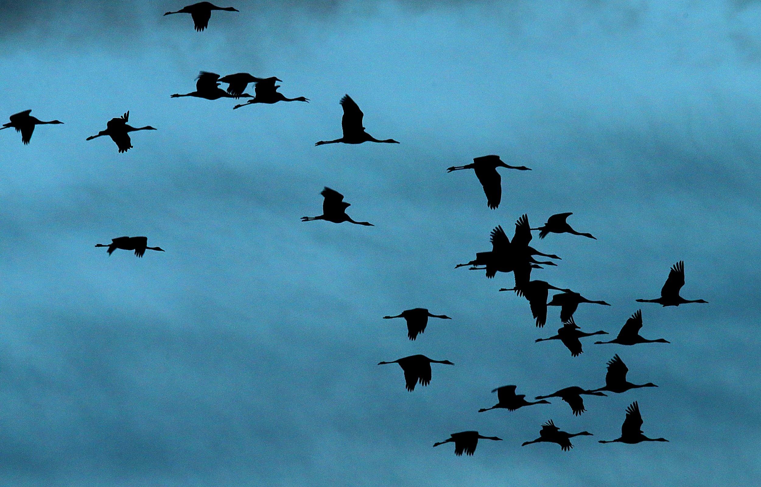 05_18_birds