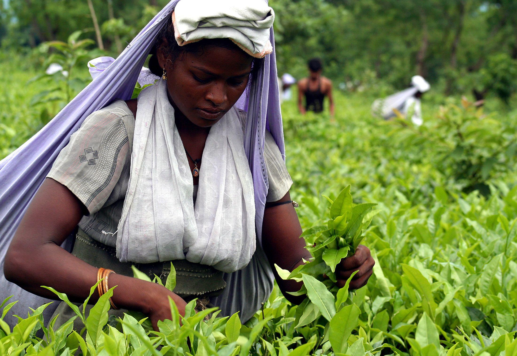 5_21_Tea Leaves