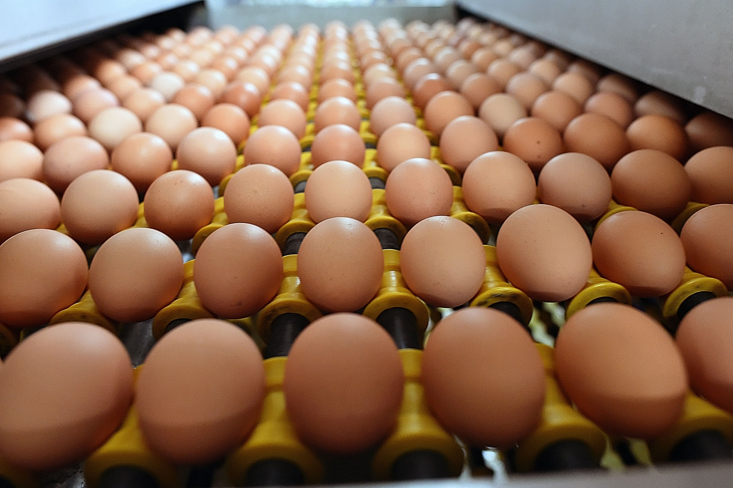 5_22_Eggs