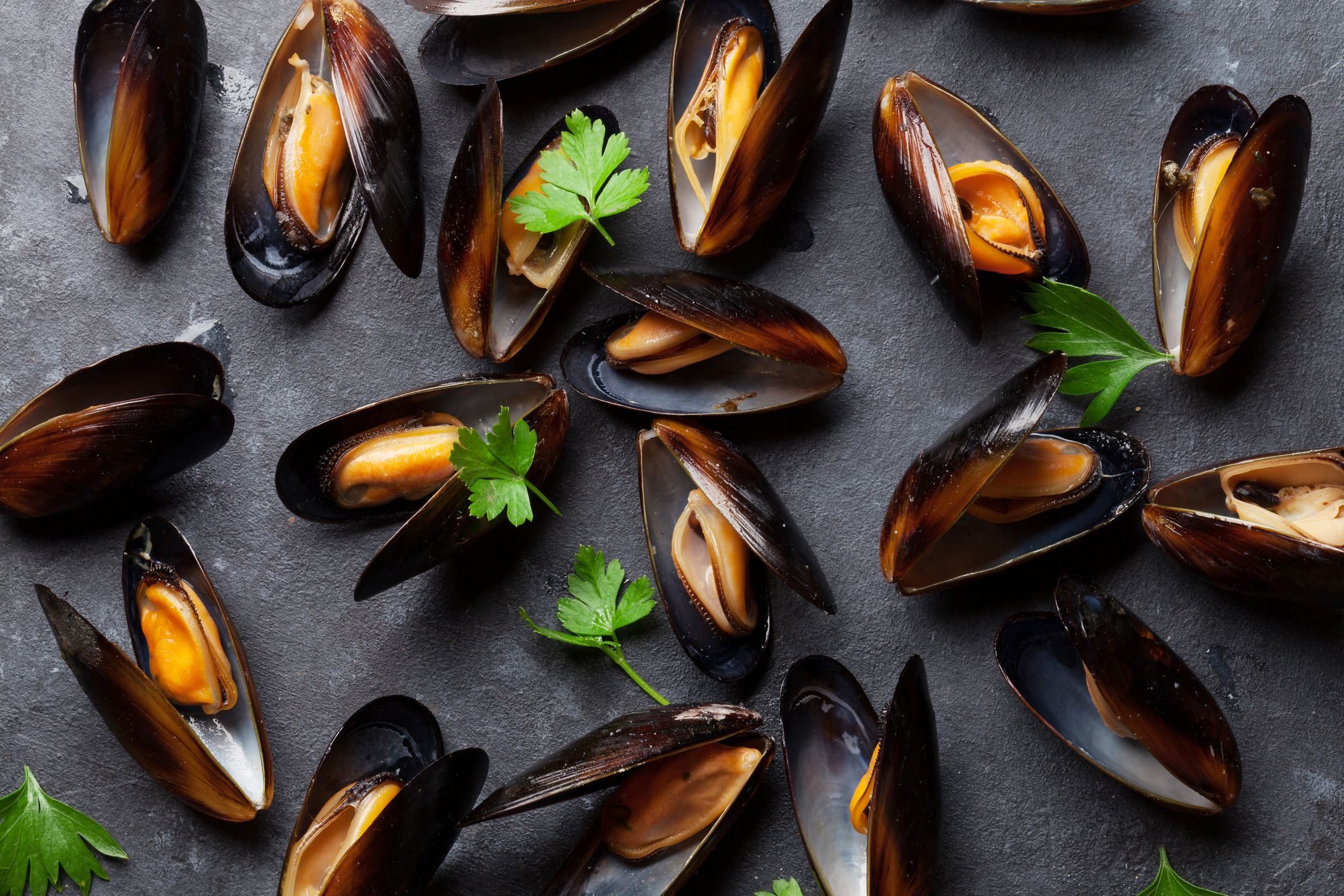 shell-fish-mussels-stock