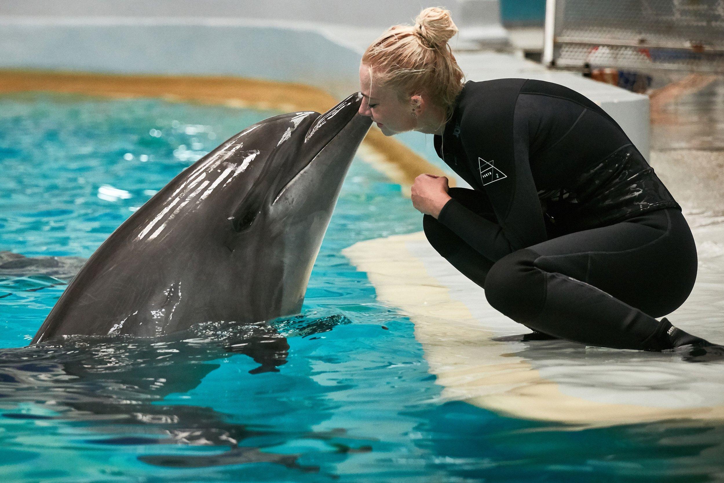 captive dolphins  u0026 39 look forward u0026 39  to play with humans  like pavlov u0026 39 s dogs