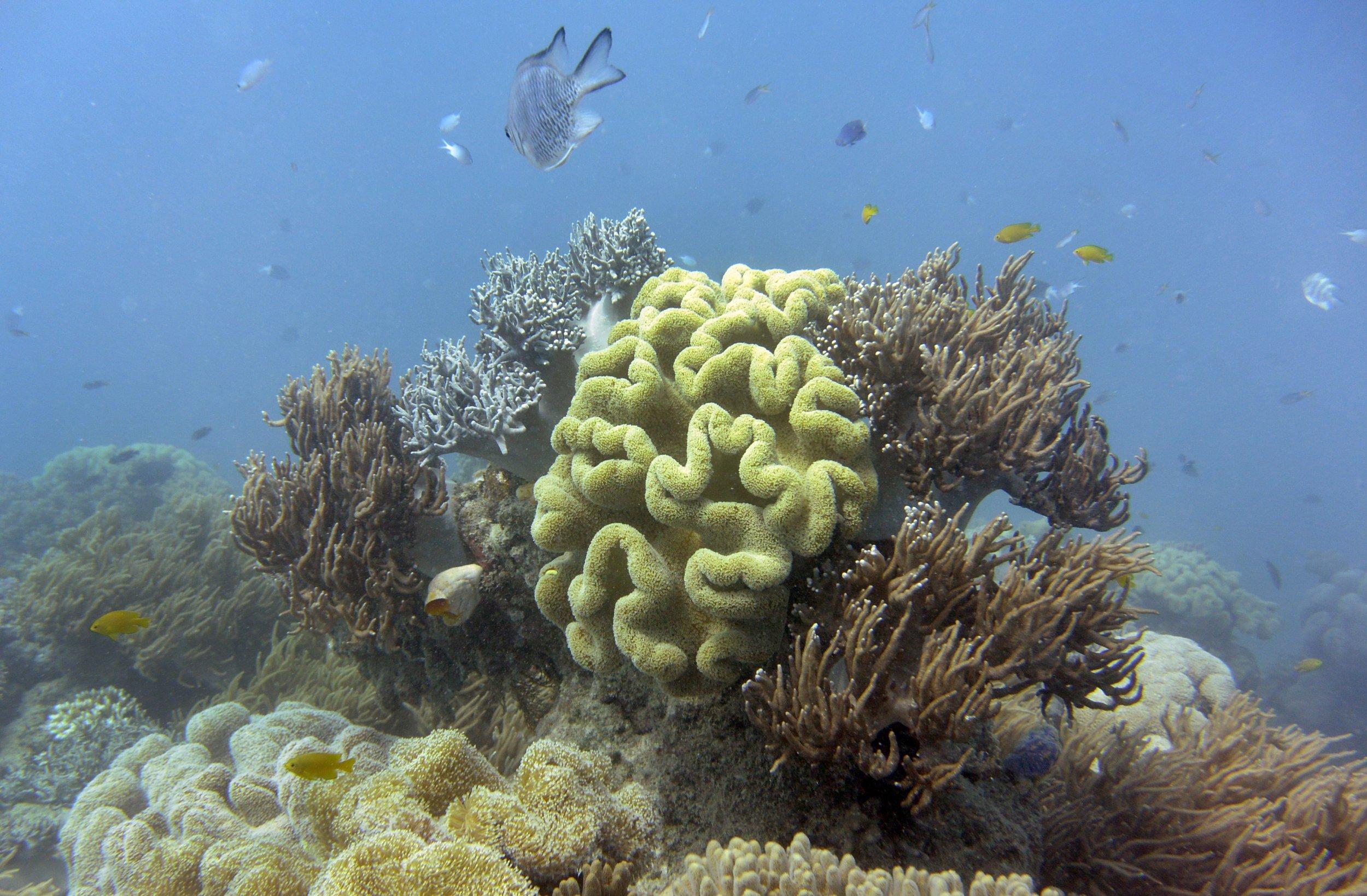 5_29_Great Barrier Reef