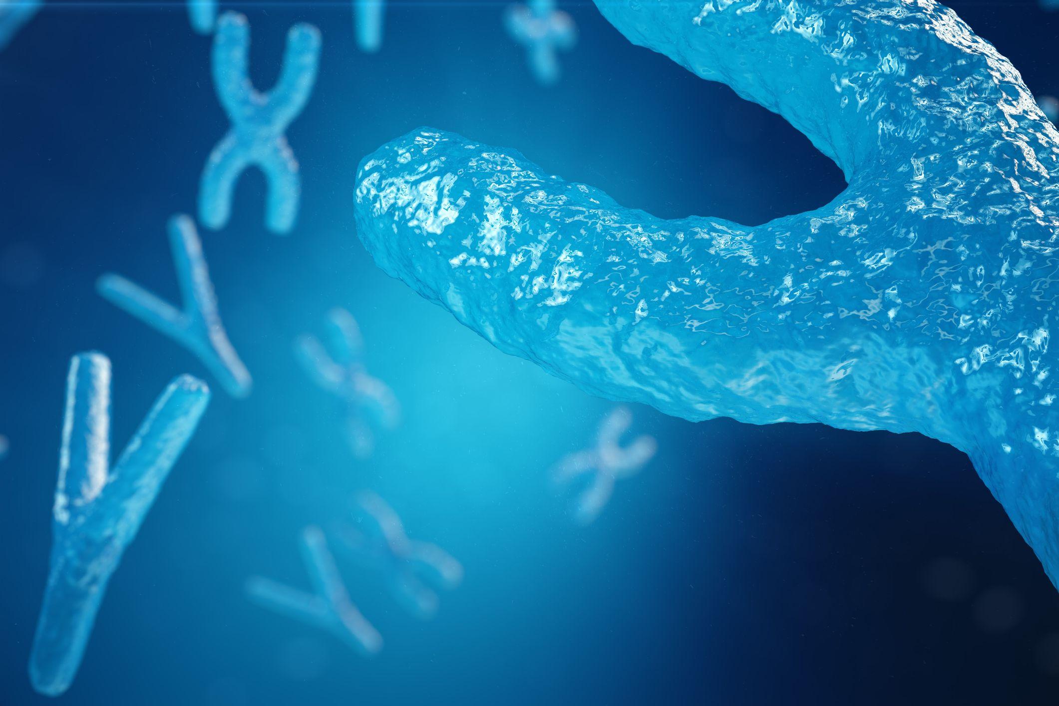 5_31_XY chromosomes