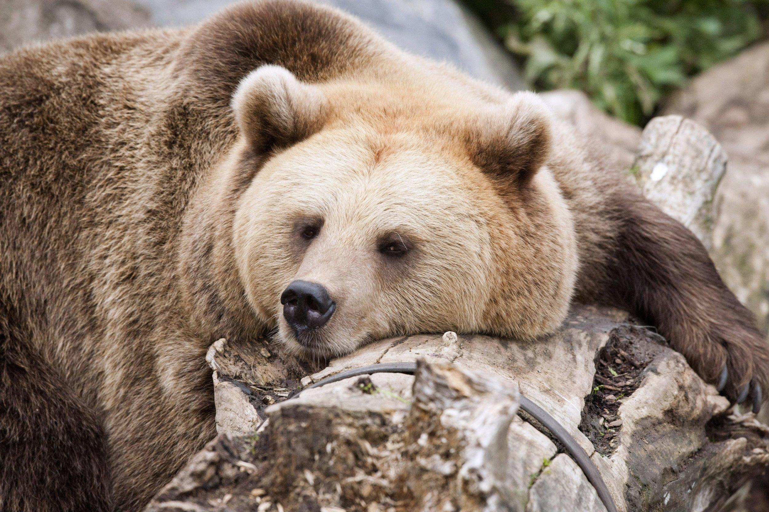 05_31_Bear