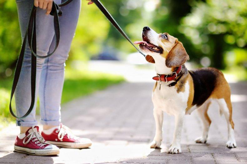 dog-walk-stock