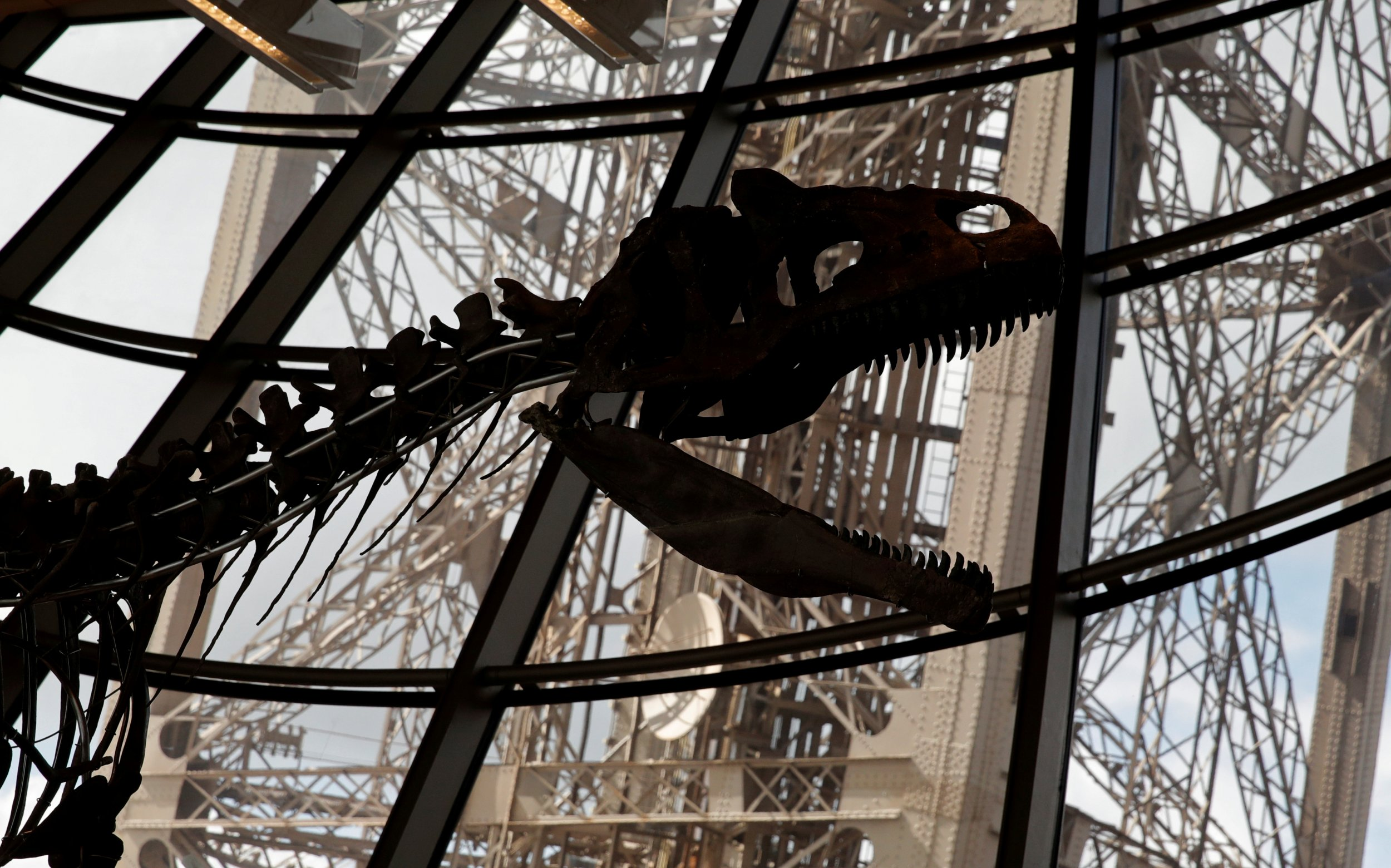 6_6_Dinosaur Auction