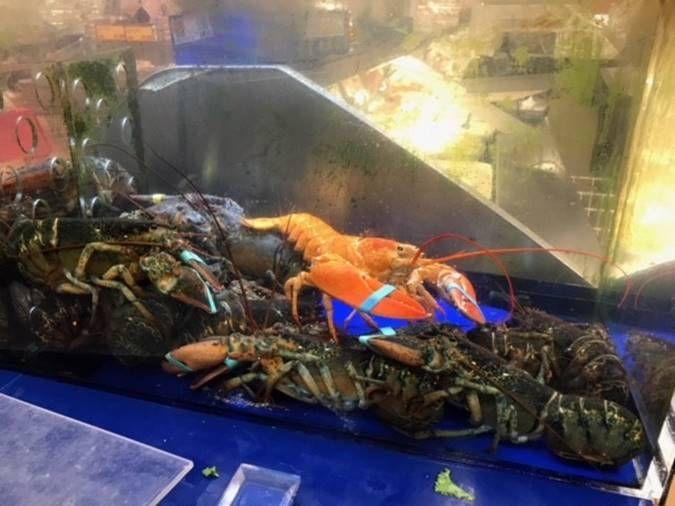0606-lobster