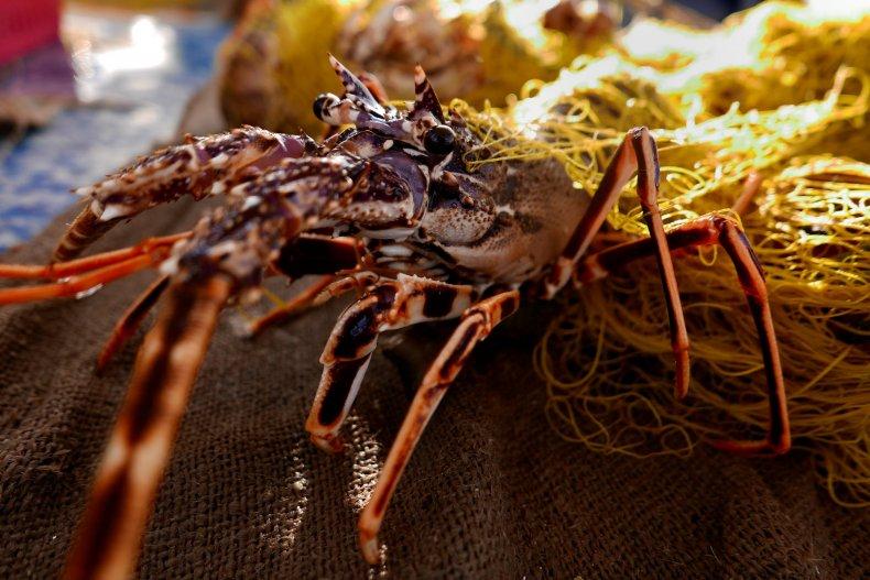 0606-Normal lobster