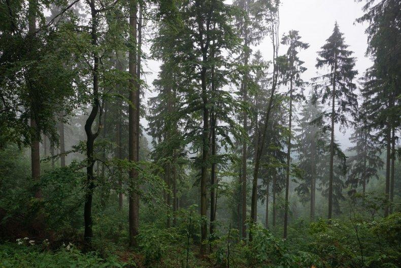 0607_trees
