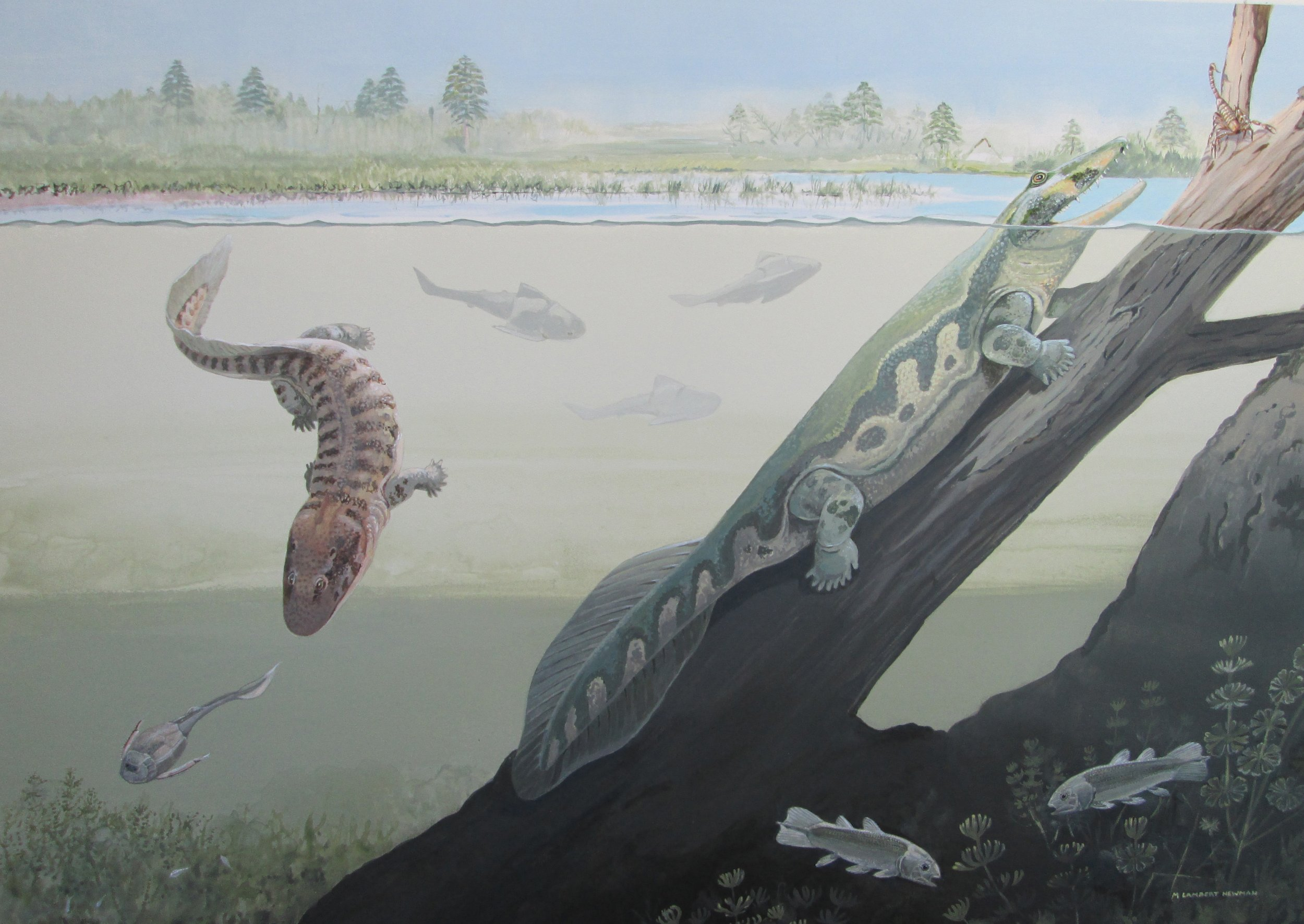 6_8_Amphibian Illustrations