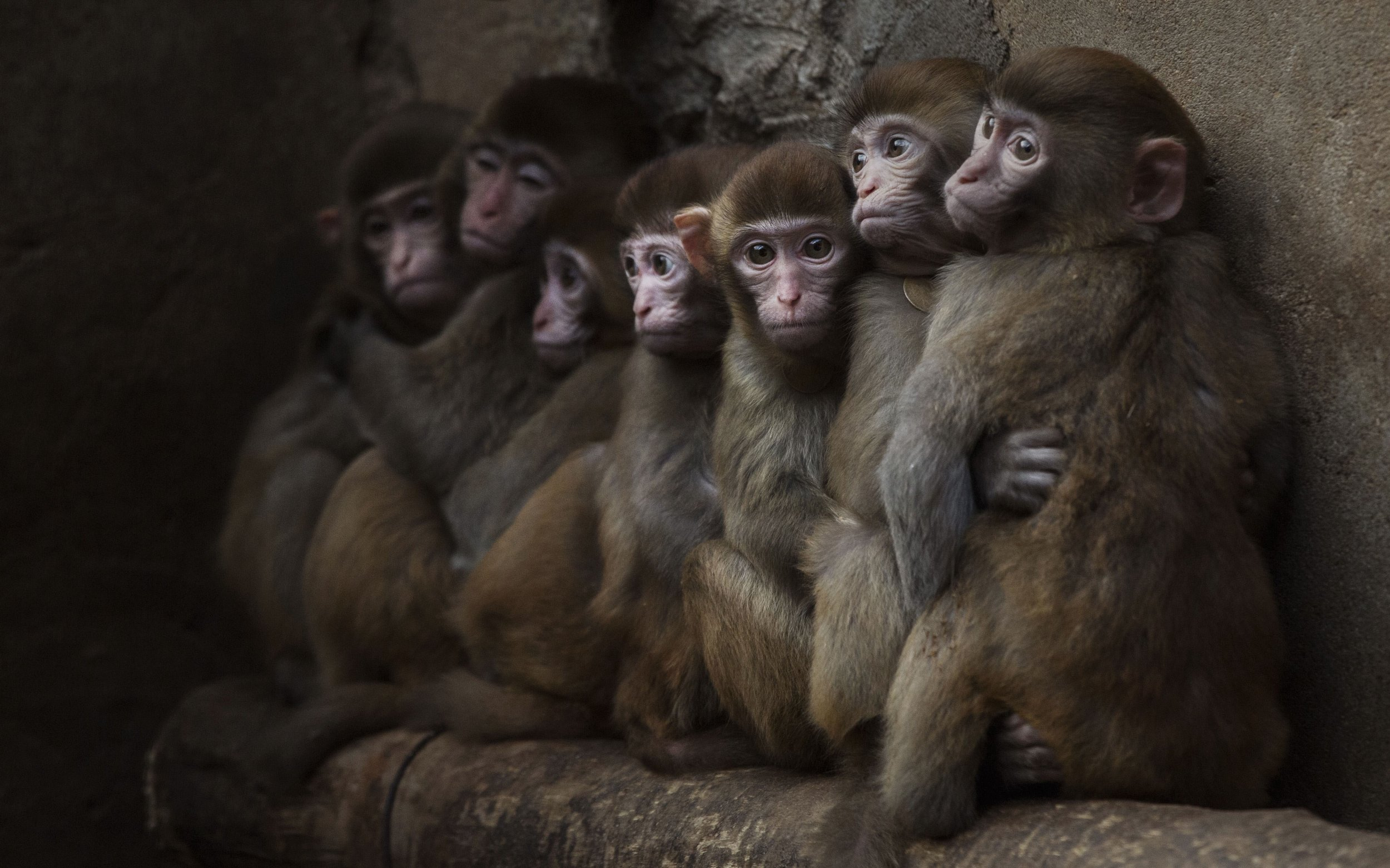 Genetically Modified Monkeys Might Aid Autism Research Genetically Modified Monkeys Might Aid Autism Research new pics