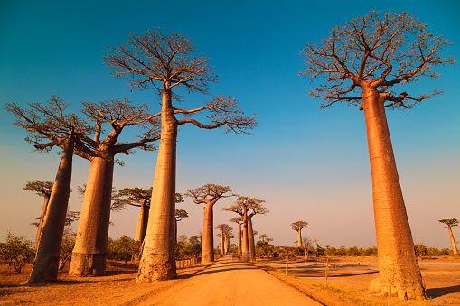 0611-trees1
