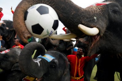2018-06-12T061559Z_1754156774_RC18A3ED7C20_RTRMADP_3_SOCCER-WORLDCUP-THAILAND-ELEPHANTS