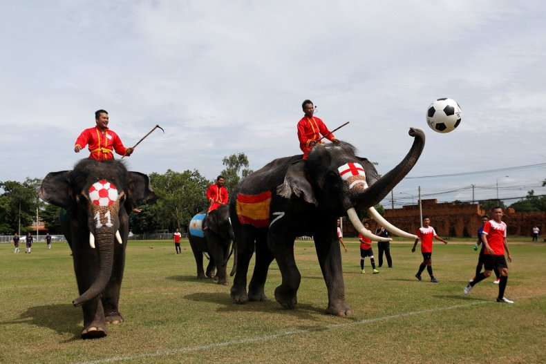 2018-06-12T060623Z_1950169149_RC1C03BFD380_RTRMADP_3_SOCCER-WORLDCUP-THAILAND-ELEPHANTS