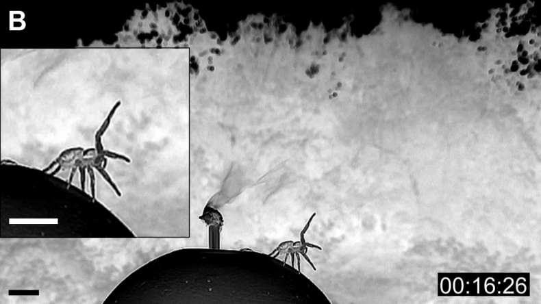 6_15_Spider Tests Breeze