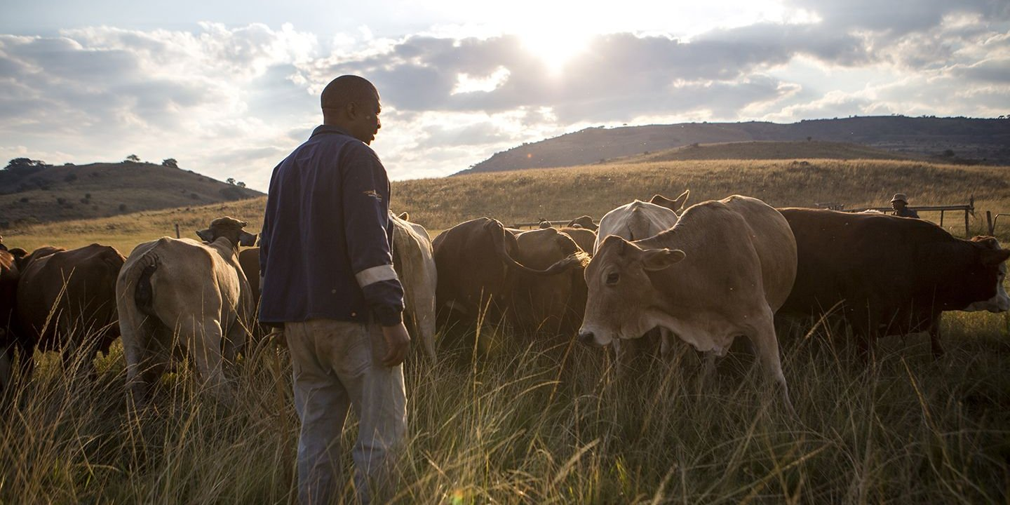 South Africa Tensions Between White Farmers And The Black