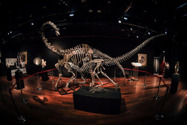 DilpdocusAllosaurus