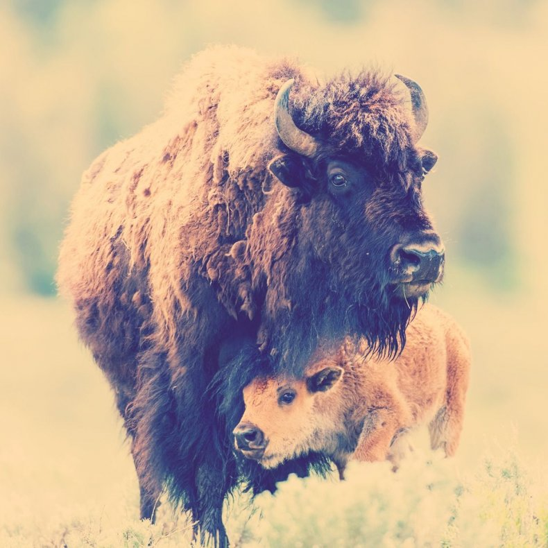 20 Yellowstone